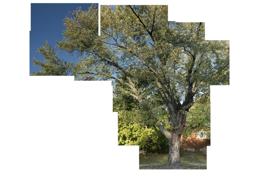 Elaina Baughman - The Shape of Trees