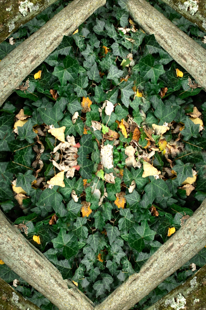 Zoe Smith - Green Leaf Kaleidoscope